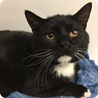 Adopt A Pet :: Ralph - Medina, OH