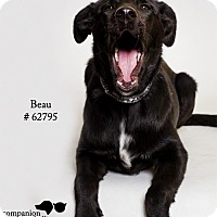 Adopt A Pet :: Beau - Baton Rouge, LA