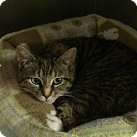 Adopt A Pet :: Jasmine - Byron Center, MI