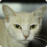 Adopt A Pet :: Sylvia P. - Sarasota, FL