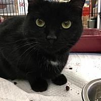 Adopt A Pet :: Belle - Smithtown, NY