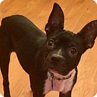 Adopt A Pet :: Statia - Jackson, TN