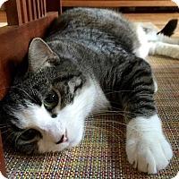Adopt A Pet :: Freckles - Brooklyn, NY