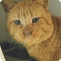 Adopt A Pet :: Dodger - Lapeer, MI