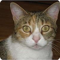 Adopt A Pet :: Tess - AUSTIN, TX