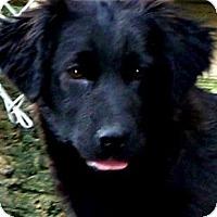 Adopt A Pet :: MISS LIGHTNING - Wakefield, RI