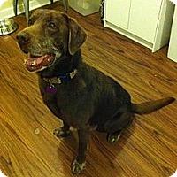 Adopt A Pet :: Rhino - Richmond, VA