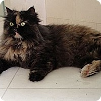Adopt A Pet :: Alissa - Beverly Hills, CA