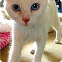Adopt A Pet :: Italiano - Alexandria, VA