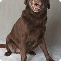Adopt A Pet :: Scott (Tripod!) - Chicago, IL