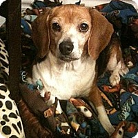 Adopt A Pet :: Elsa-ADOPTION PENDING! - Hadley, MI
