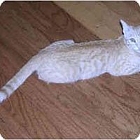 Adopt A Pet :: Nash/Rambler - Davis, CA