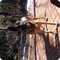 Adopt A Pet :: Sandy - selden, NY