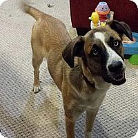 Adopt A Pet :: Alex - Saskatoon, SK