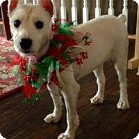 Adopt A Pet :: Molly-Pending Adoption - Omaha, NE