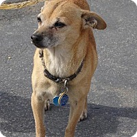 Adopt A Pet :: Chico - Apple Valley, CA