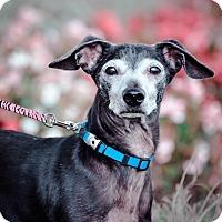 Adopt A Pet :: Magnum - Gainesville, FL