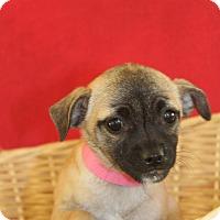 Adopt A Pet :: Canoli - Waldorf, MD
