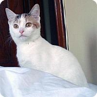 Adopt A Pet :: Hullaballoo - Chicago, IL