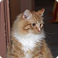 Adopt A Pet :: Leo - Hillsboro, IL