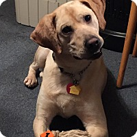 Adopt A Pet :: Conan - Hagerstown, MD