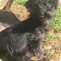 Adopt A Pet :: Jackson - Smyrna, GA