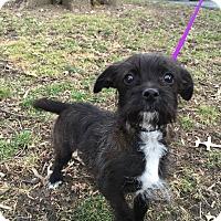Adopt A Pet :: Cora Lea - Hillsboro, IL