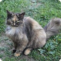 Adopt A Pet :: Ella YOUNG FEMALE - Morehead, KY