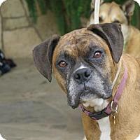 Adopt A Pet :: Zoe - San Antonio, TX