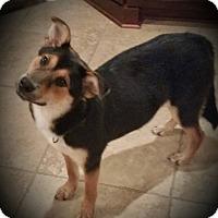 Adopt A Pet :: Emerson - Nashua, NH