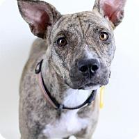 Adopt A Pet :: Liza - Needs Foster - Bloomington, MN