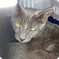 Adopt A Pet :: Anna - Camilla, GA