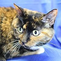Adopt A Pet :: Mocha - Winston-Salem, NC