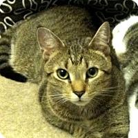 Adopt A Pet :: Pauli (with Bose & Fermi) - Fairfax, VA