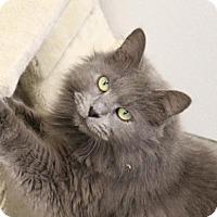 Adopt A Pet :: Captain Grimshanks - Greensboro, NC