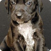 Adopt A Pet :: Hendricks - Newland, NC
