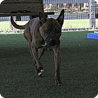 Adopt A Pet :: Boston - Odessa, FL