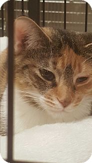 Calico Kitten for adoption in Griffin, Georgia - Martina