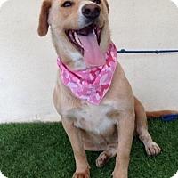 Adopt A Pet :: Pumpkin - San Diego, CA