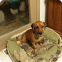 Adopt A Pet :: Archie - Aurora, IL