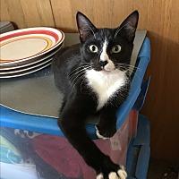 Adopt A Pet :: Kaia - Long Beach, CA