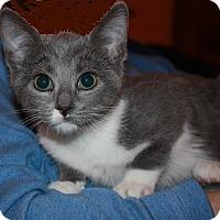 Adopt A Pet :: Prinsey Mae - Washington, DC