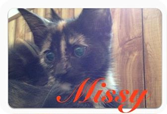 Domestic Shorthair Kitten for adoption in Fairborn, Ohio - Missy