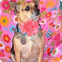 Adopt A Pet :: Trixie - Homewood, AL