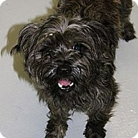 Adopt A Pet :: Otis - Muskegon, MI