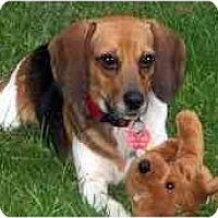 Adopt A Pet :: Demi - Novi, MI