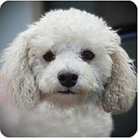 Adopt A Pet :: Mischa - La Costa, CA