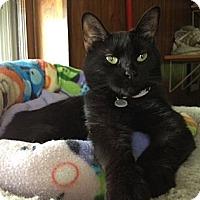 Adopt A Pet :: Rosie - Byron Center, MI