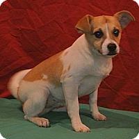 Adopt A Pet :: Landon - East Sparta, OH
