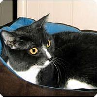 Adopt A Pet :: Terri - Medway, MA